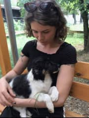 The day we adopted our border collie mix Alma.