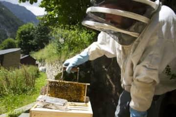 Sebas and his beehives