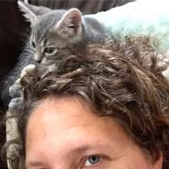 Kitties always want to nest in my hair