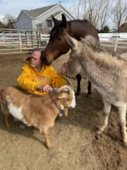"""Russell brushing the goat and the donkey and horse """"patiently"""" waiting their turn. Lots of brushing/love to go around."""