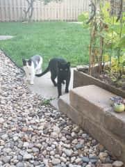 Outside cats