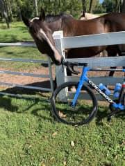 My horse Spyder.