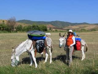 Learning how to handle wayward burros on the Camino de Santiago: Sancho & Popeye. (Spain)