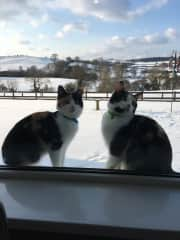 Can we come in please!