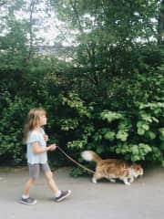 Cat walking near the flat {Sweden}