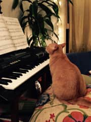 Mango at my keyboard