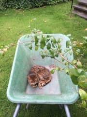 Kitty gardening