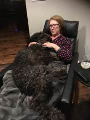 Dexter the 80lb Doodle who believes  he's a lapdog! Calgary Feb, 2017