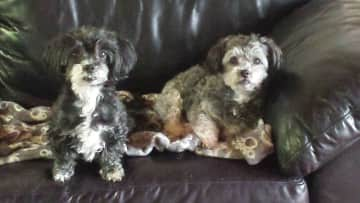 Aggie and Boo
