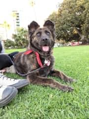 Tigre, Matt's sister's dog