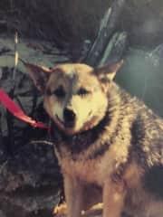 Pet Dog - Kelly