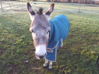 Dickie the donkey on our sit in France