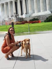 Roxy the 6 month old pup on her first day out to Washington DC