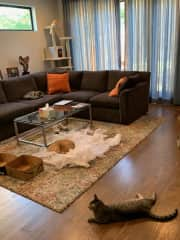 All the cats lounging on main floor