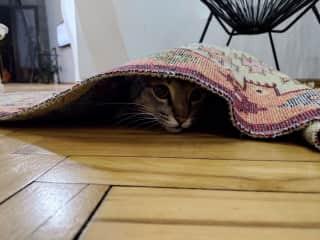 Carpet sniper
