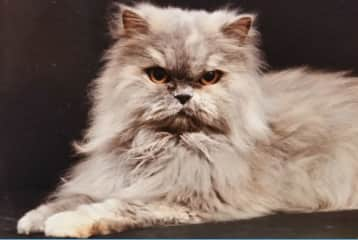 This was my kittie, Silver, who lived a grand age of 17.