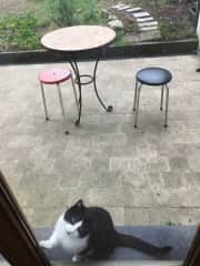 My cat Kafka <3