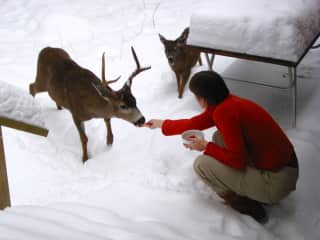 I've since learned not to feed the deer, but I like the photo.