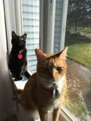 Dusk & Tabby