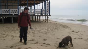 Molly enjoying the beach