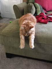Hodges doing yoga