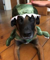 Look out for the Maligator!!!