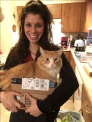 Cat in a box anyone?