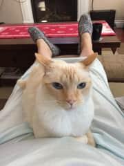 Cat sitting in Ottawa ON