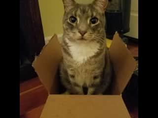 It's a box