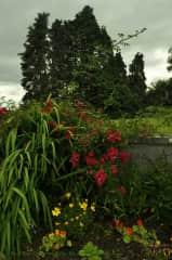 my garden out the front door in summer