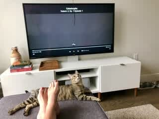 Fig playing with string on a stick while Josephine Netflix binging