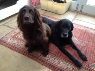 Tinker and Smudge, wonderful companions