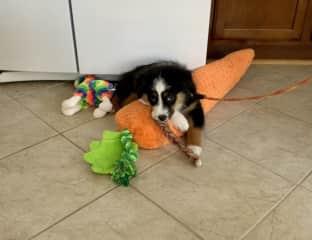 Logan loves his toys