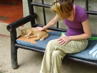 Mandy makes friends everywhere she goes. This was her favorite cat in Colombia. She wouldn't leave its side!
