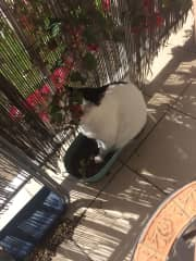 Fido's favourite balcony spot