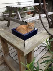 Pot plant - cat included