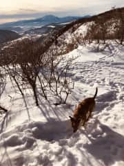 Sammy hiking up to the cross in the snow