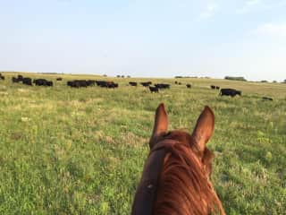Rocket and me checking on cattle