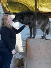 At a wolf sanctuary in Washington State