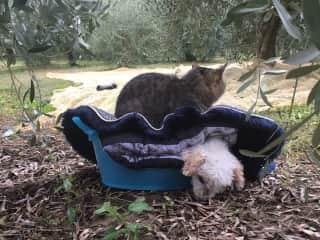 Minnie the cat keeping Milo warm