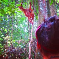 Trekking to see the orangutans and learn about conservation efforts in Sumatra, Indonesia