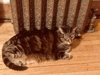 Kiora warming by the radiator