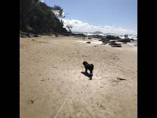 Perfect dog beach