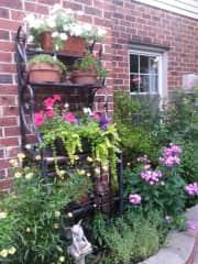 part of my garden