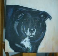Of all our dogs, Russell was Marianne's favourite dog. When he was at the age of 15 marianne made a painting of him