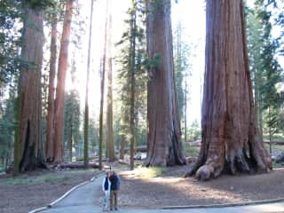 Visiting a beautiful sequoia grove
