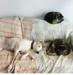 Sugar, Indie and Ally