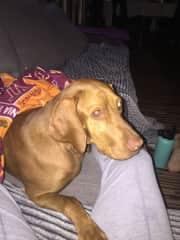 Copper. He loves his blankies/boopies