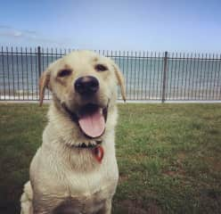 Big smiles from Archie after a fun day at the beach