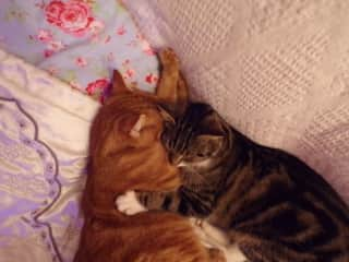 Our beloved cats who passed away:Ginger and Chaussette. We miss them so much.
